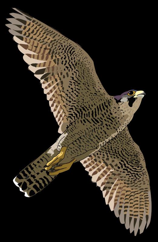 Peregrine Falcon clipart Prairie clipart Falcon Download Prairie