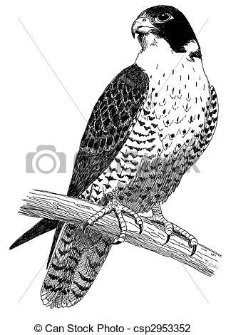 Peregrine Falcon clipart Peregrine Falco Falcon Art Duck