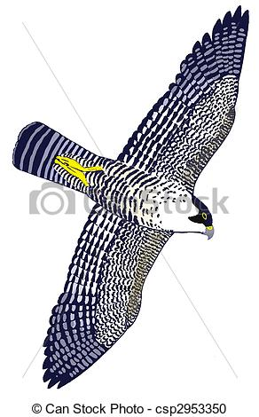 Peregrine Falcon clipart Peregrine Falco Falcon Illustration Duck