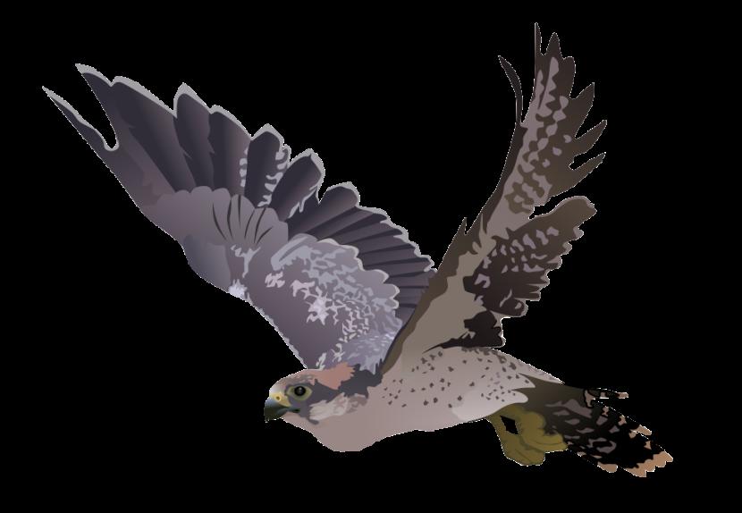 Falcon clipart peregrine falcon Art Clip Free Falcon Use