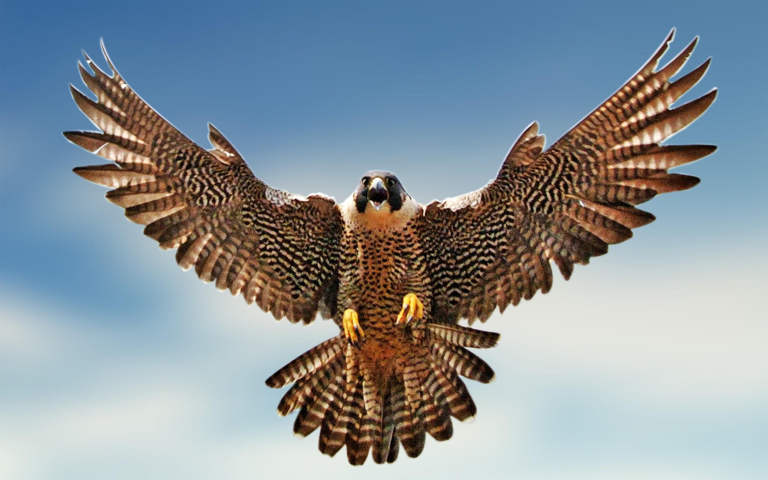 Dead clipart falcon Falcon of wallpaper Head falcon