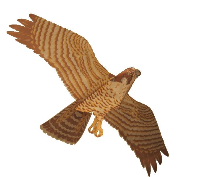 Peregrine Falcon clipart bird Clipart Clip Search Falcon 129KB