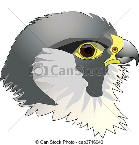 Peregrine Falcon clipart cartoon Raptors falcon Peregrine  Clipart
