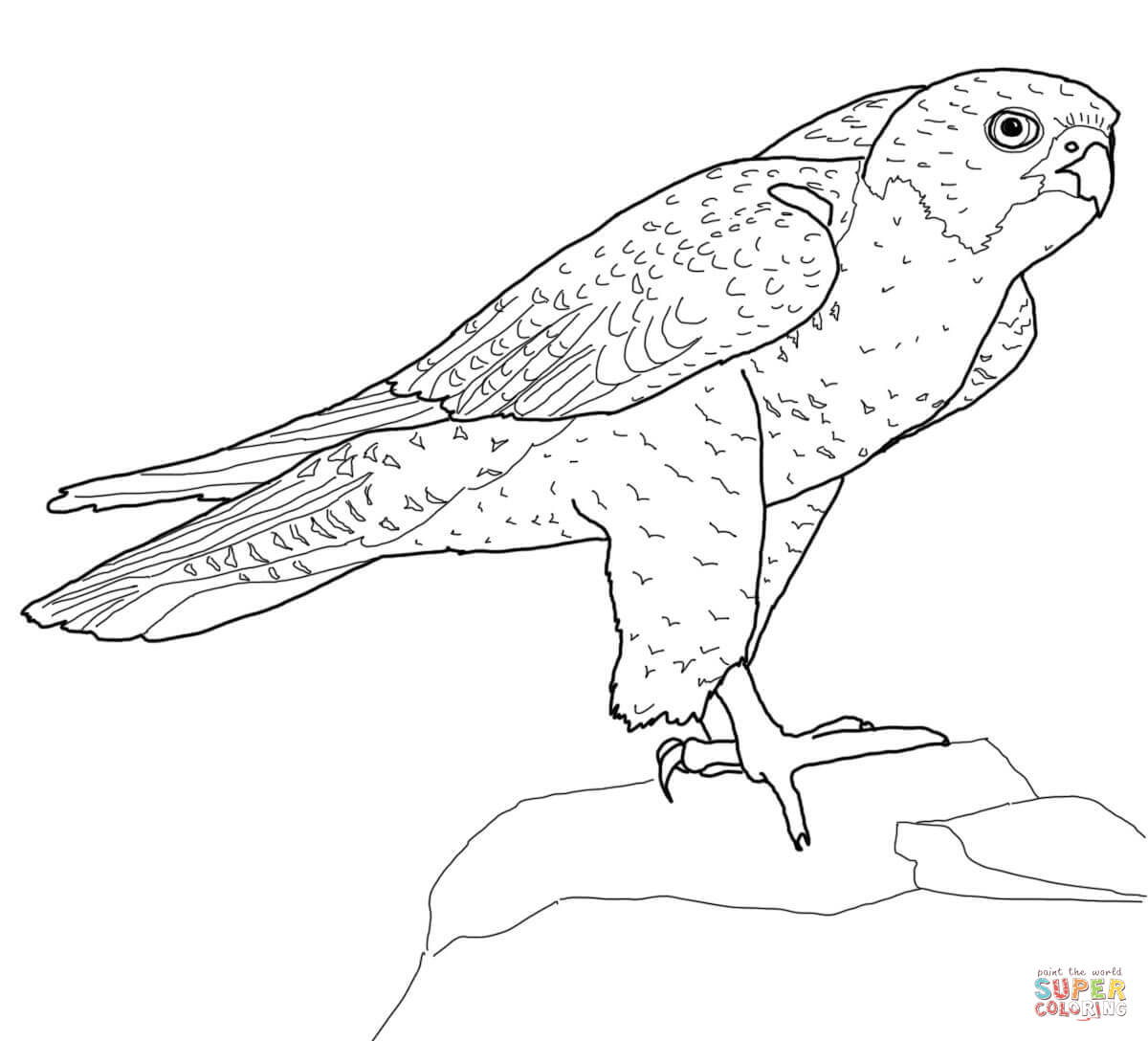Peregrine Falcon clipart coloring To the Coloring Click Peregrine