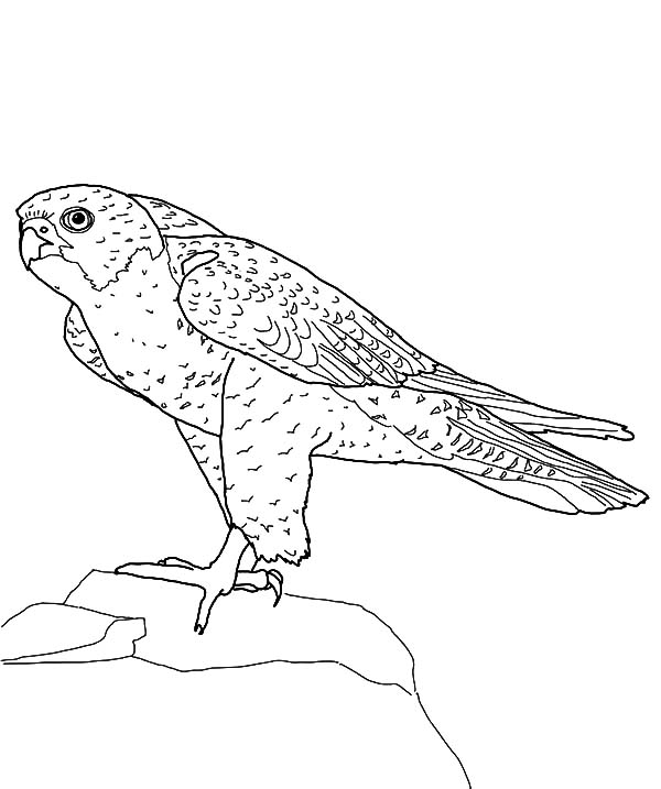 Peregrine Falcon clipart cartoon Falcon Coloring NetArt Hill Falcon