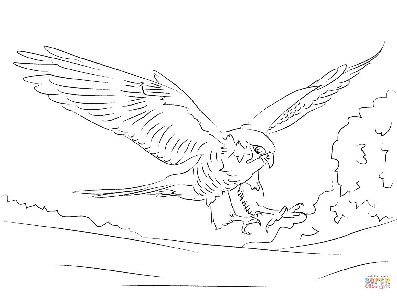 Peregrine Falcon clipart coloring View the Click Falcon iPad