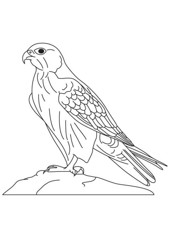 Peregrine Falcon clipart coloring Falcon Falcon Animal Coloring Animal