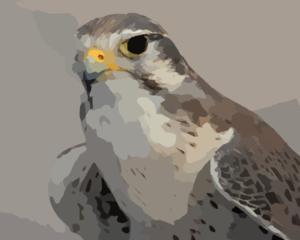 Peregrine Falcon clipart bird At Falcon clip Peregrine Art