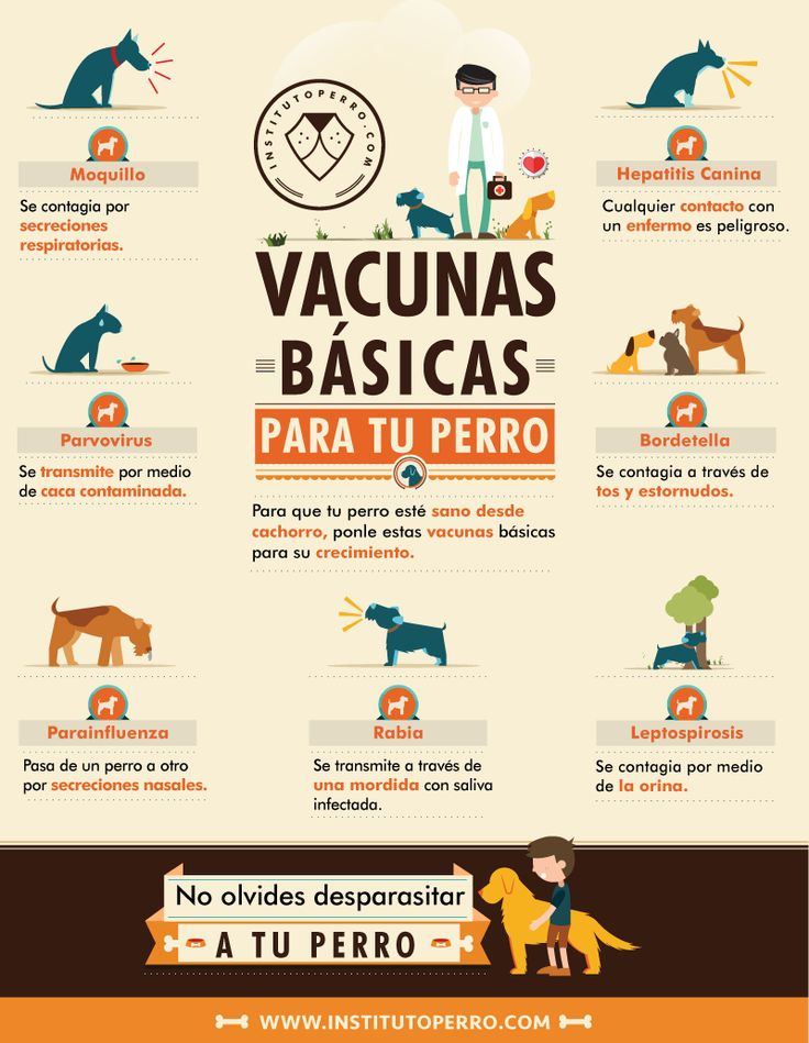 Perro clipart veterinary assistant Best  on ☆Vet☆ images