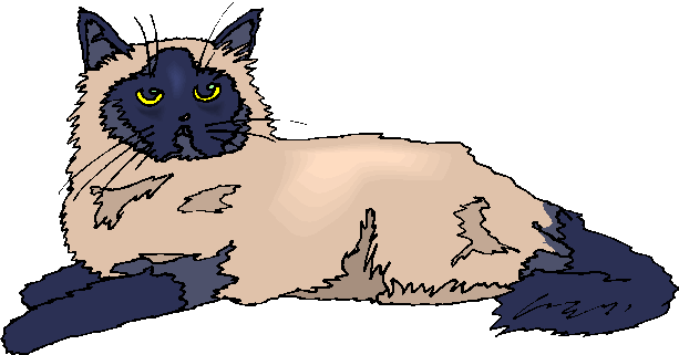 Persian Cat clipart cute cat White Free Cat Free Clipart