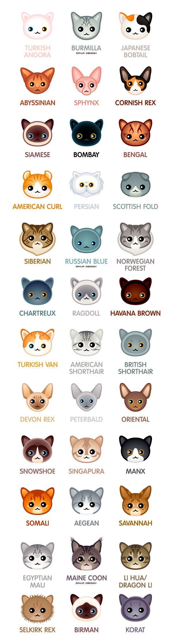 Persian Cat clipart kawaii cat Breed love my  Cat