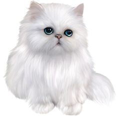 Persian Cat clipart kawaii cat Transparent Cat Kitten White mix