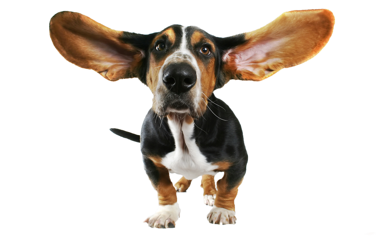 Pet clipart funny dog PNG View size High Transparent
