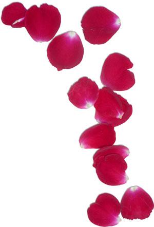 Petal clipart Rose Download Clipart Petal Rose