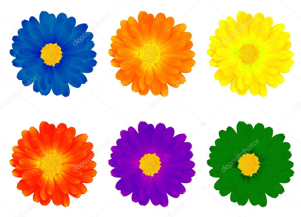 Petal clipart colourful flower — Photo Six — flowers