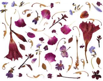 Petal clipart flower leaves Etsy petal pressed leaves PNG