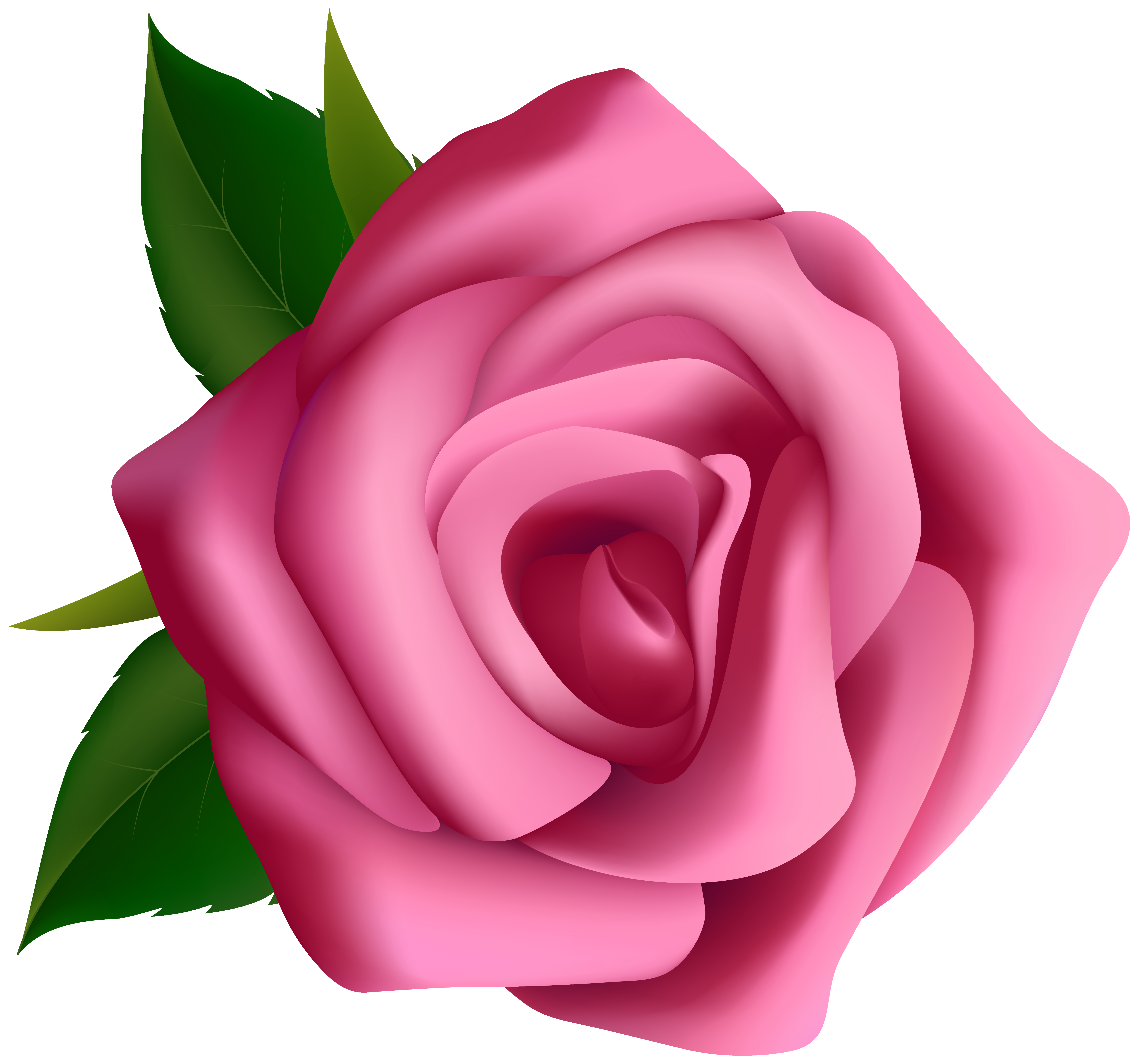 Petal clipart pink rose Rose High Quality Rose Gallery