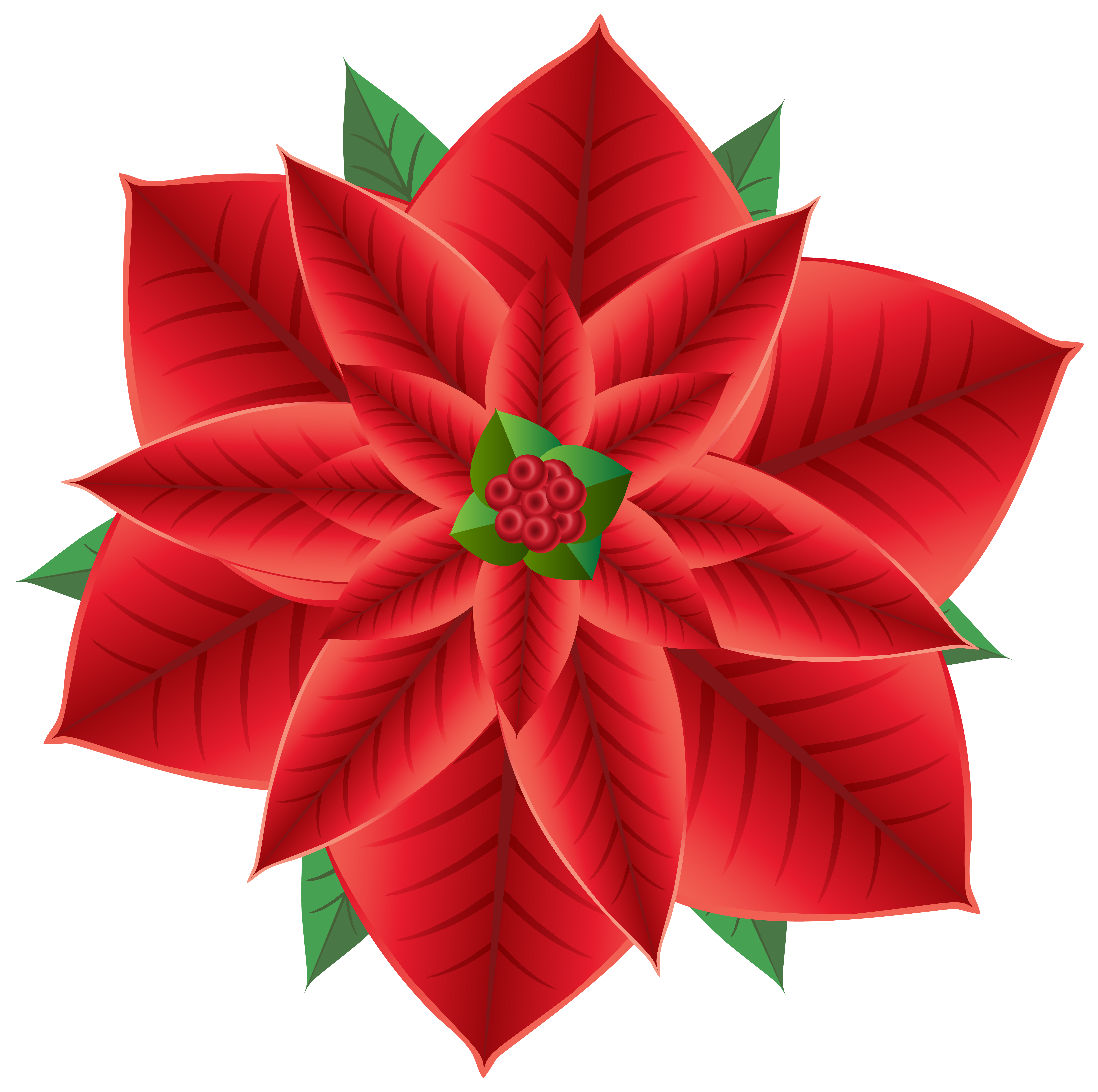Poinsettia clipart blue Gallery  Christmas View PNG