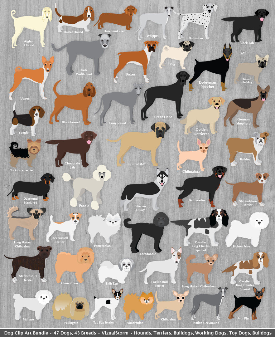 Pets clipart animal rescue Animal Dog Clipart Toy Dog