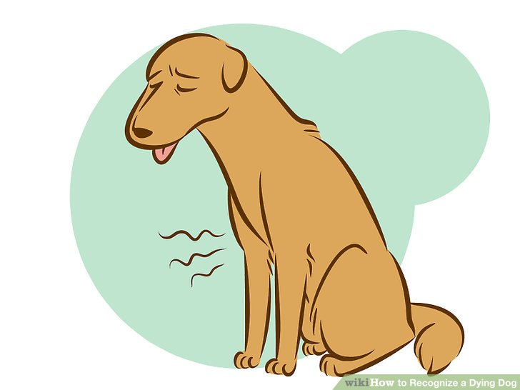 Pet clipart died Titled wikiHow to a Dying