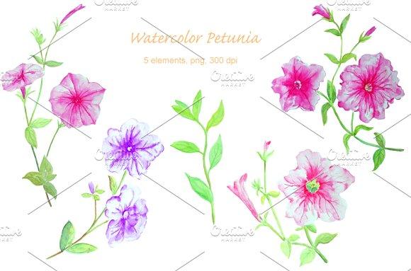 Petunia clipart ~ Creative Watercolor Petunia Flower