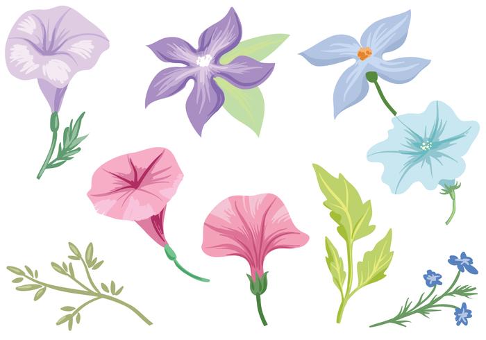 Petunia clipart Cliparts Zone Cliparts Free Petunia