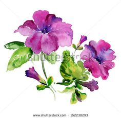 Petunia clipart hibiscus flower Painting Irina  Watercolor flowers