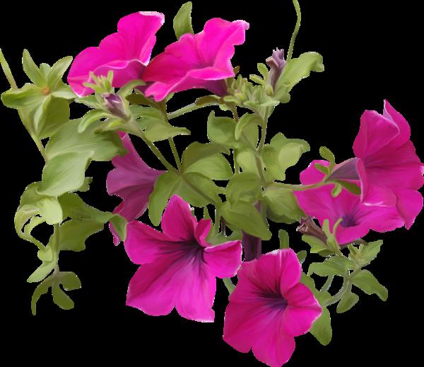 Petunia clipart hibiscus flower Tube bouquets flowers fleurs flowers