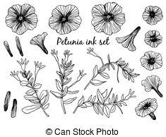Petunia clipart black and white Petunia of Art Petunia Clip