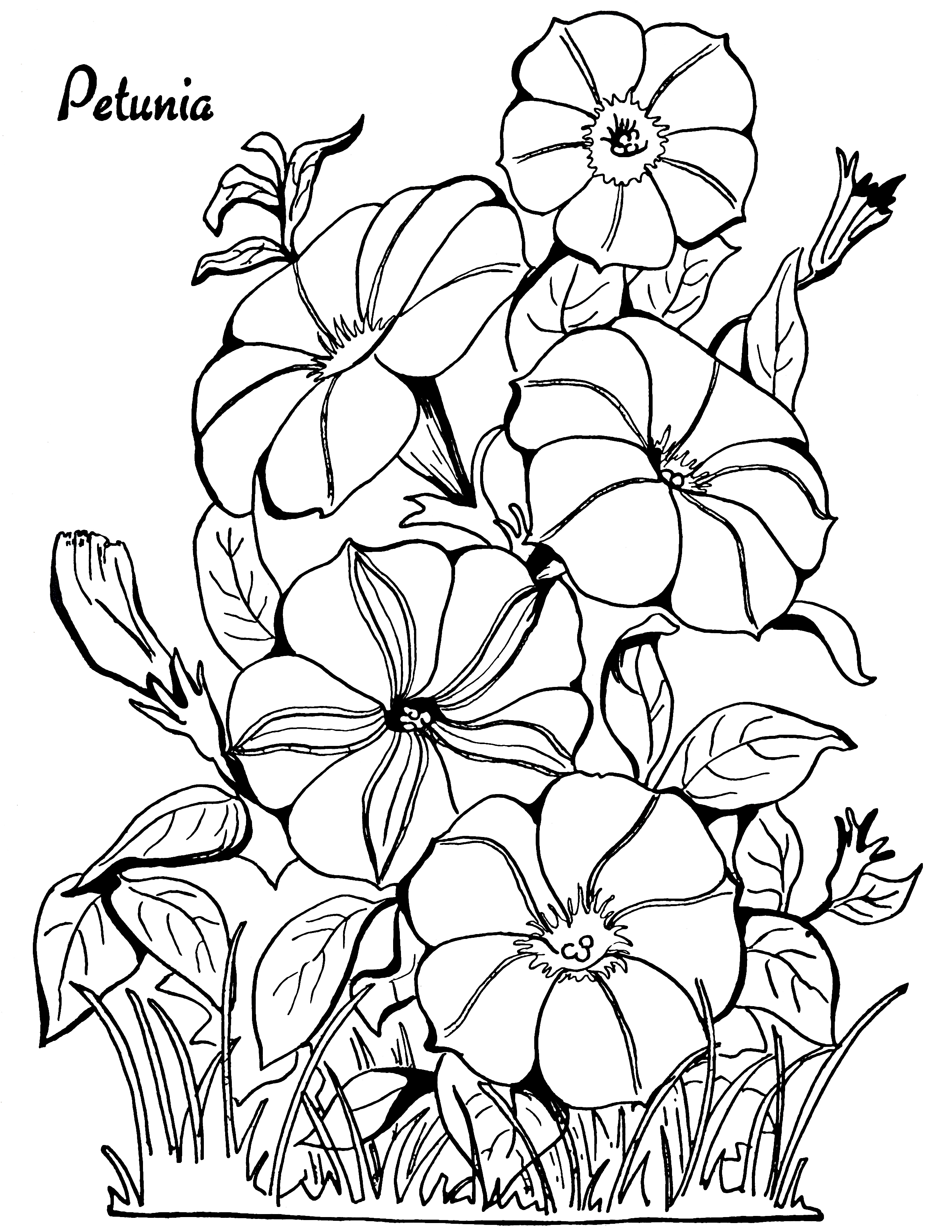 Petunia clipart black and white Adult Fairy Page Page Petunias