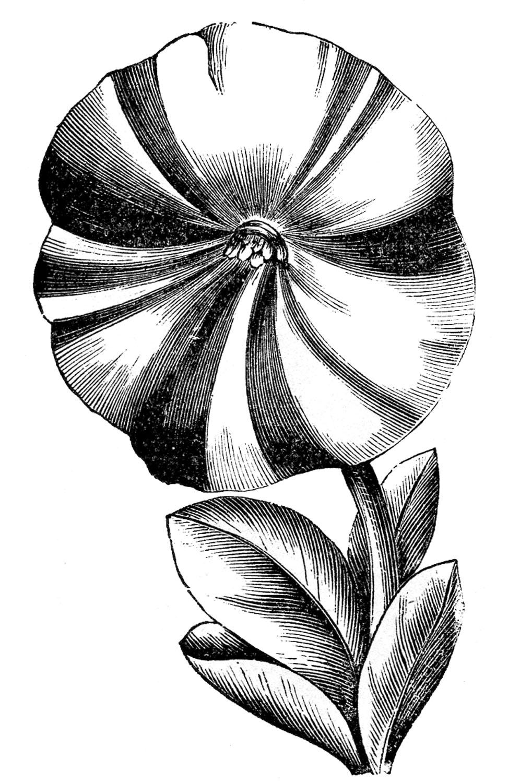 Petunia clipart black and white – Petunias Fairy Vintage Clip