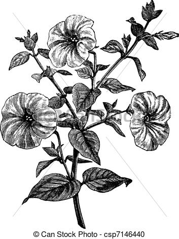 Petunia clipart black and white Free vintage Petunia and 380