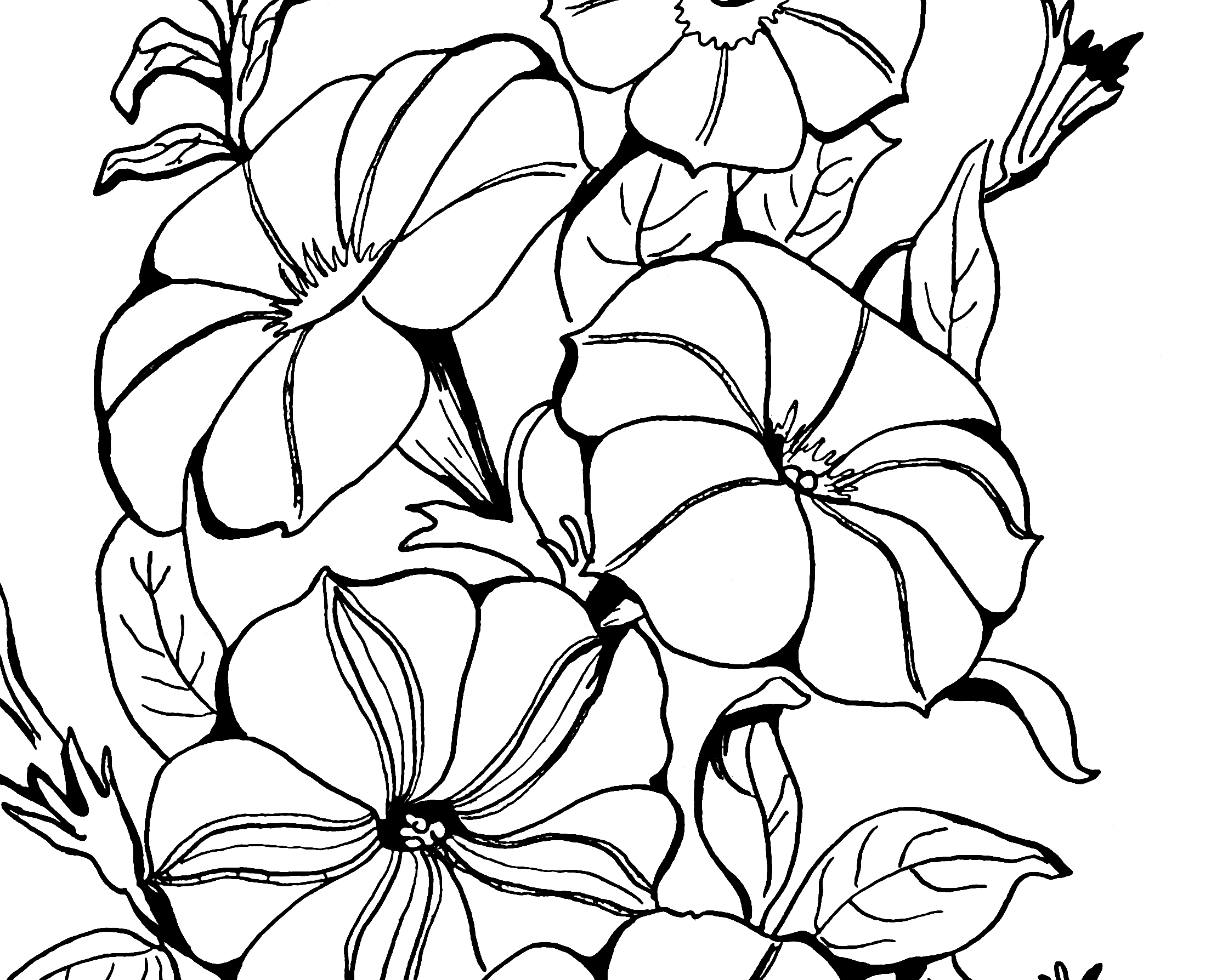 Petunia clipart black and white Petunias! Graphics Coloring Page The