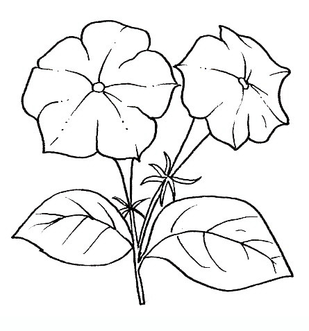 Petunia clipart black and white Flowers Best Drawings of Pinterest