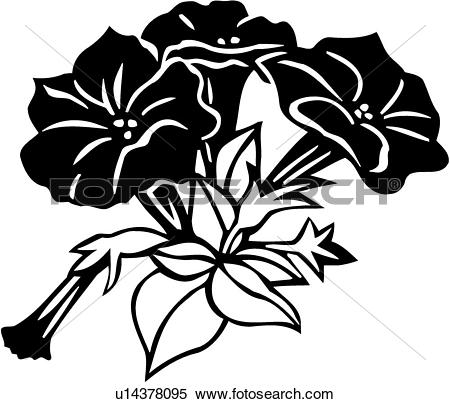 Petunia clipart black and white Drawings clipart #12 Download Petunia