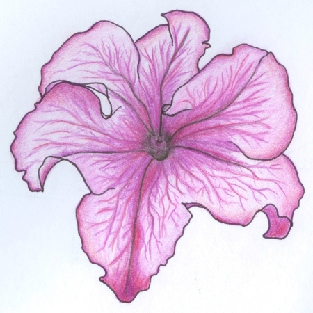 Petunia clipart hibiscus flower Zone Petunia Flower Cliparts Cliparts