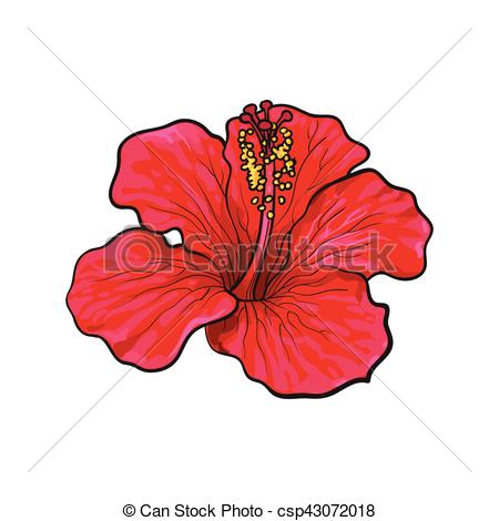 Petunia clipart hibiscus flower Bright sketch red tropical Single