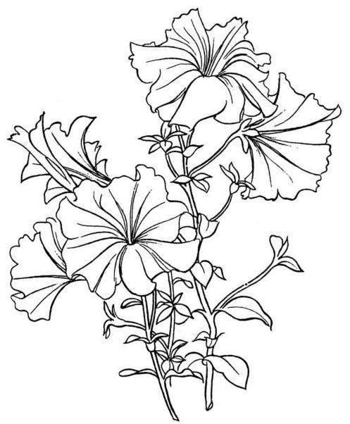 Petunia clipart hibiscus flower Tattoo petunias Best  Petunia