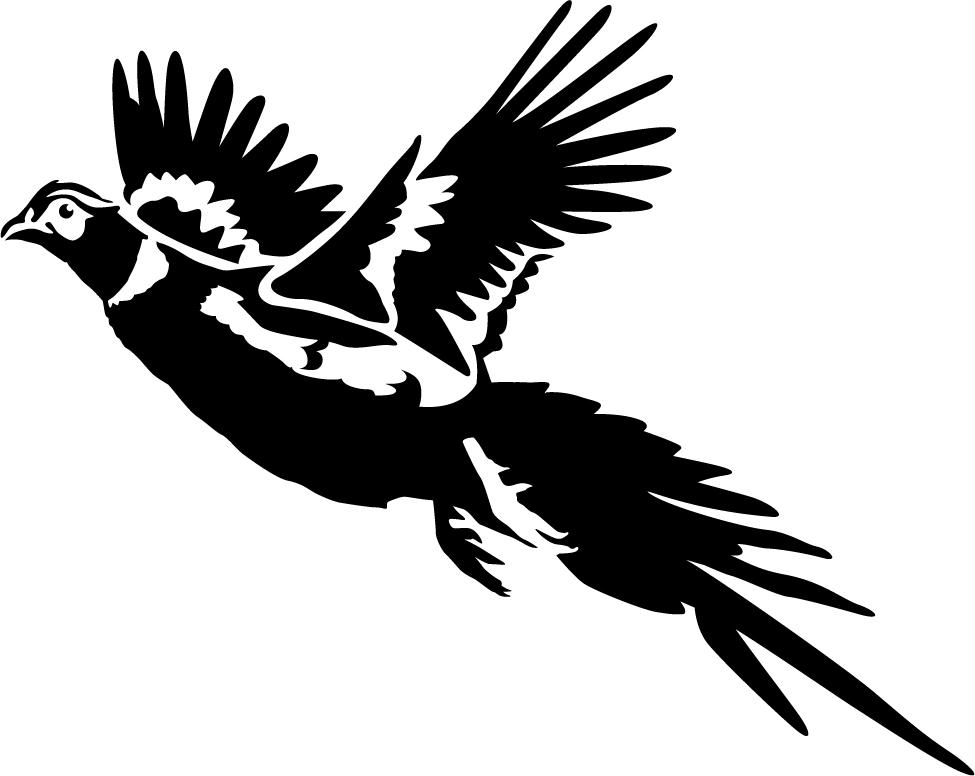 Pheasant clipart bird hunting Clipart hunting Clipart Pheasant Hunting