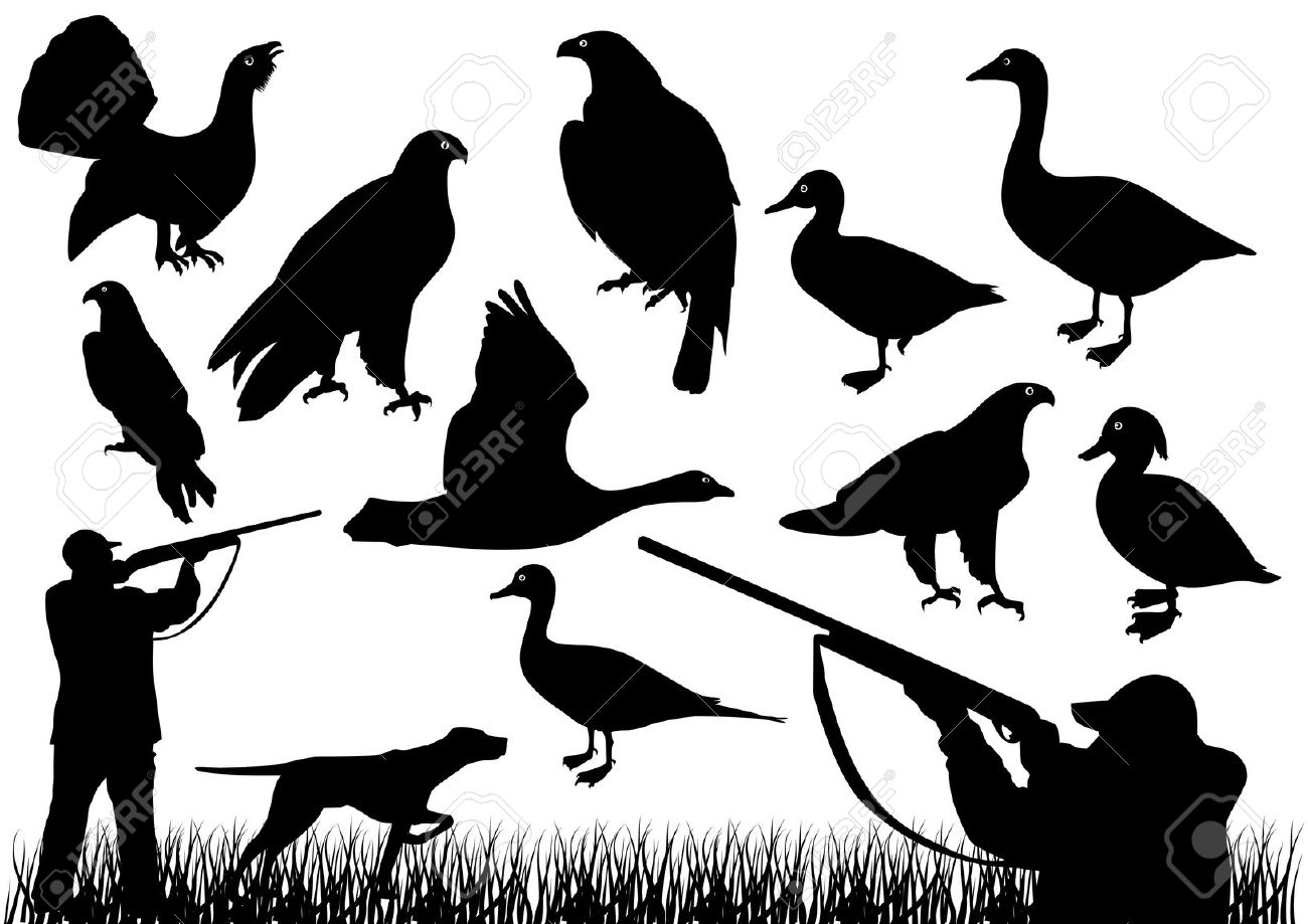 Pheasant clipart bird hunting Clip Download Clip Hunting Hunting