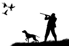 Pheasant clipart bird hunting Zone clipart hunt Cliparts Dove