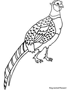 Pheasant clipart green Pinterest pheasant Drawing Pencil Pheasant