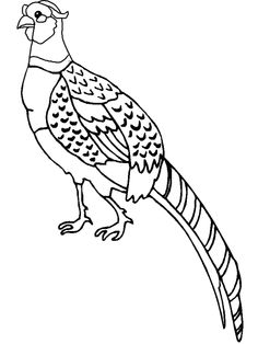 Pheasant clipart green In and Redlin Sketch be