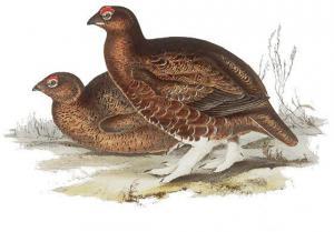 Pheasant clipart grouse Download Grouse Clip Clipart Art