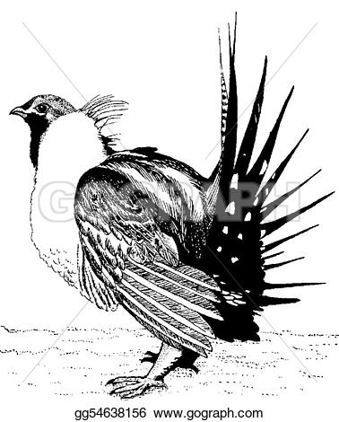 Pheasant clipart grouse Ink grouse Clipart urophasianuspen Drawing