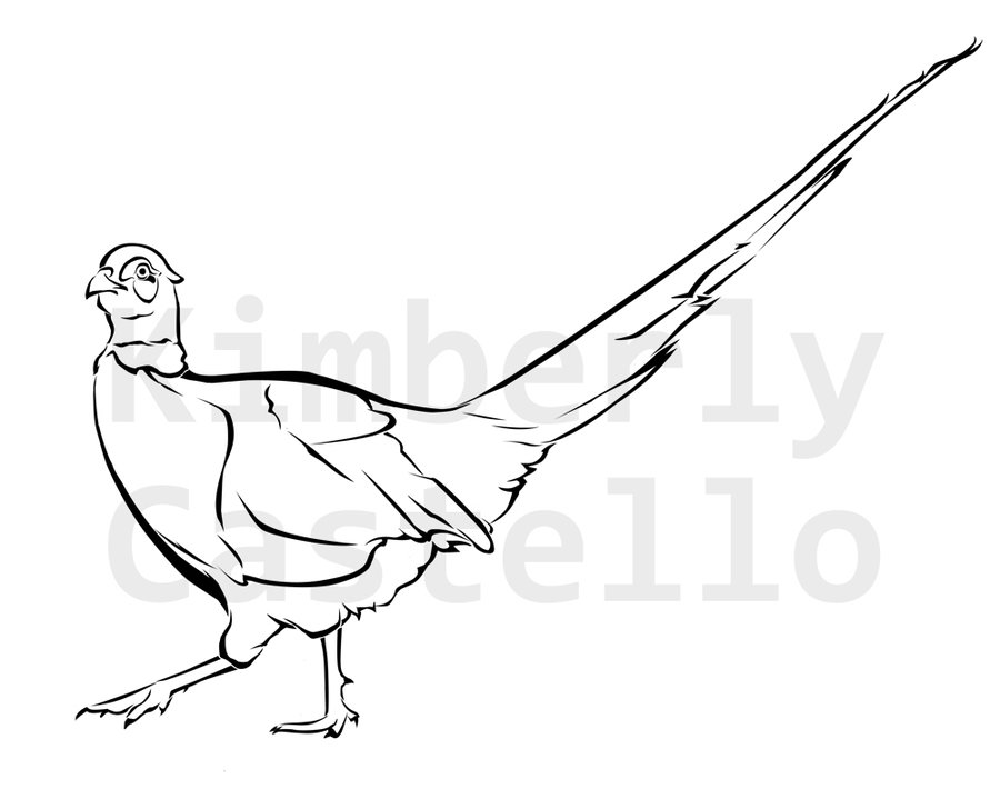 Pheasant clipart ring necked Pheasant castello Wildlife by Commission:
