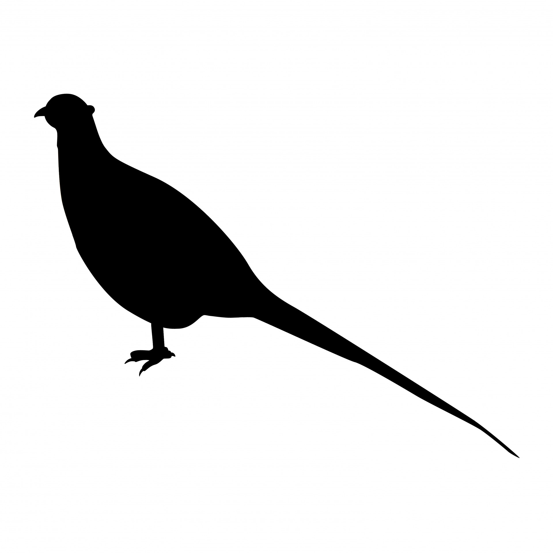 Pheasant clipart silhouette Pictures Silhouette Pheasant Free Stock