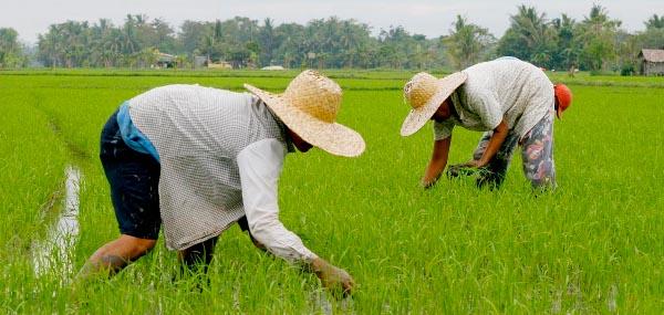 Phillipines clipart filipino farmer  wordpress Make Traits 15