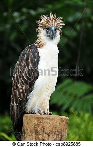 Philippine Eagle clipart Images Stock Monkey Eagle Philippine
