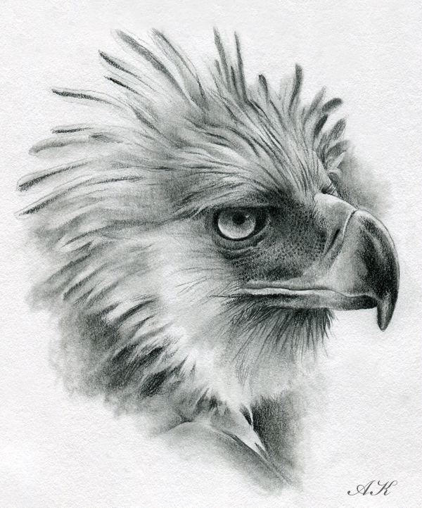 Phillipines clipart pencil drawing Eagle eagles Philippine how Philippine